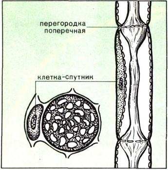 Значение корня в природе картинки