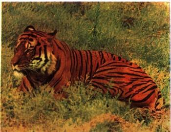 Картинки о природе тайги