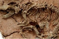 Воздействие климата на погибель динозавров