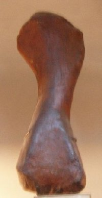 Эпизавр