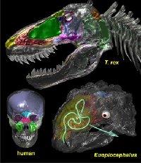 Чем задумывались динозавры